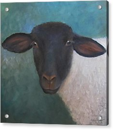 Clyde - A Suffolk Lamb Painting Acrylic Print by Cheri Wollenberg