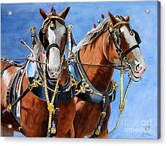 Acrylic Print featuring the painting Clydesdale Duo by Debbie Hart
