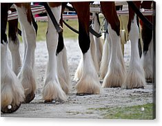 Acrylic Print featuring the photograph Clydesdales 5 by Amanda Vouglas