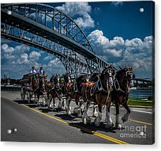 Clydesdales And Blue Water Bridges Acrylic Print