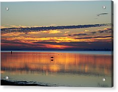 Co Existing Acrylic Print by Michele Kaiser