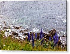Coastal Cliff Flowers Acrylic Print by Melinda Ledsome