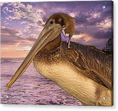 Coastal Fairytales Acrylic Print by Betsy Knapp