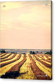 Coastal Farm Pei Acrylic Print by Edward Fielding