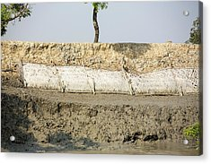 Coastal Flood Defences In The Sunderbans Acrylic Print by Ashley Cooper