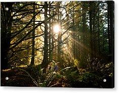 Coastal Forest Acrylic Print