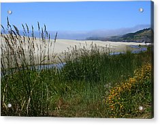 Acrylic Print featuring the photograph Coastal Grasslands by Debra Kaye McKrill