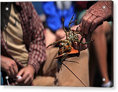 Coastal Maine Is Lobster Acrylic Print by Karol Livote