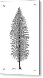 Coastal Redwood Acrylic Print