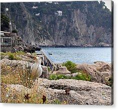 Coastal Resident Acrylic Print