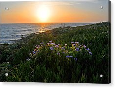 Coastal Sunset Acrylic Print by Lynn Bauer