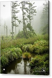 Acrylic Print featuring the photograph Coastal Wetlands by Susan Parish