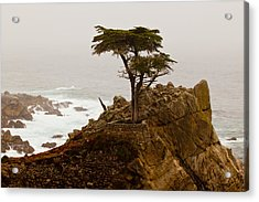 Coastline Cypress Acrylic Print by Melinda Ledsome