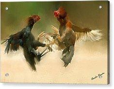 Cockfight Acrylic Print