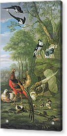 Cock Pheasant Hen Pheasant And Chicks And Other Birds In A Classical Landscape Acrylic Print by Pieter Casteels