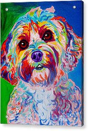 Cockapoo - Carmie Acrylic Print by Alicia VanNoy Call
