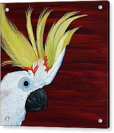 Cockatoo Acrylic Print by Aileen Carruthers