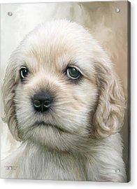 Cocker Pup Portrait Acrylic Print by Carol Cavalaris