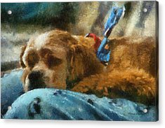 Cocker Spaniel Photo Art 07 Acrylic Print by Thomas Woolworth