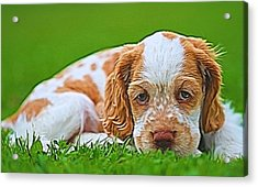 Cocker Spaniel Puppy In Grass Acrylic Print by Dan Sproul