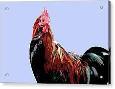 Cockerel - Blue Acrylic Print