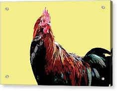 Cockerel - Yellow Acrylic Print