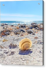 Acrylic Print featuring the photograph Cockle Shell Summer At Sanibel by Peta Thames