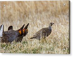 Cocks And Hen Acrylic Print by Jill Bell