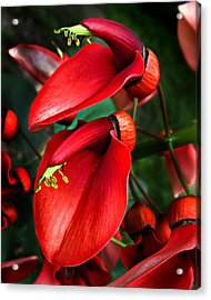 Acrylic Print featuring the photograph Cockspur Coral Tree by William Tanneberger