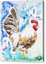 Cocky Acrylic Print by Shaina Stinard