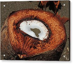 Coconut Acrylic Print by Gregory Young