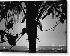 Coconut Palm - Cocotier - Ile De La Reunion - Reunion Island Acrylic Print by Francoise Leandre