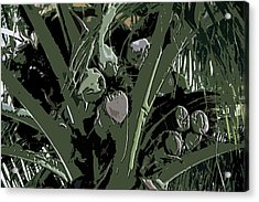 Acrylic Print featuring the digital art Coconut Palms by Karen Nicholson