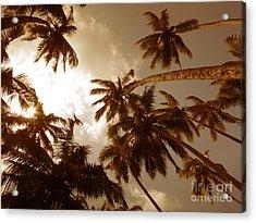 Coconut Palms Acrylic Print by Mini Arora