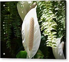 Cocoon Flower Acrylic Print by Felipe Nunez