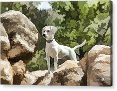 Cody On The Rocks Acrylic Print