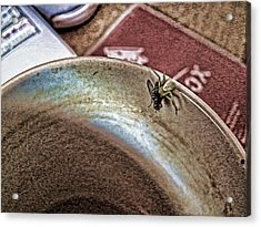 Acrylic Print featuring the digital art Coffee Cup Spider Fly Oh My by Robert Rhoads