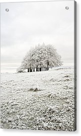 Cold Acrylic Print by Anne Gilbert
