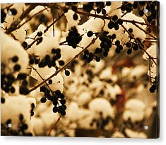 Cold Berries Acrylic Print by Christian Rooney