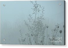 Cold Blues Acrylic Print