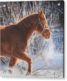 Cold Acrylic Print by Carrie Ann Grippo-Pike