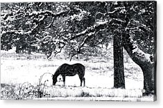 Acrylic Print featuring the photograph Cold Comfort by Julia Hassett