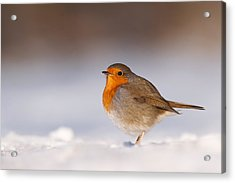 Cold Fee Warm Light Robin In The Snow Acrylic Print by Roeselien Raimond