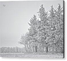 Cold Lace Acrylic Print by Odd Jeppesen