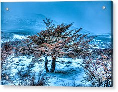 Cold Morning Acrylic Print by Roman St