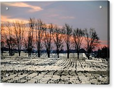 Cold Morning Treeline Acrylic Print