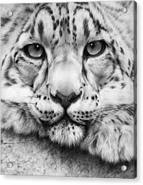 Cold Stare - Drawing Acrylic Print by Natasha Denger