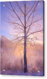 Cold Winter Morning Acrylic Print by Darren  White