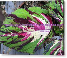Coleus Smile Acrylic Print by Marlene Rose Besso