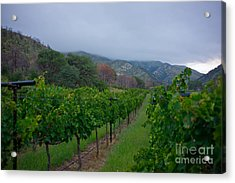 Colibri Vineyards Acrylic Print